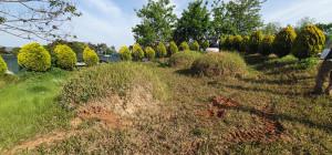 전북 부안 묘지 사초